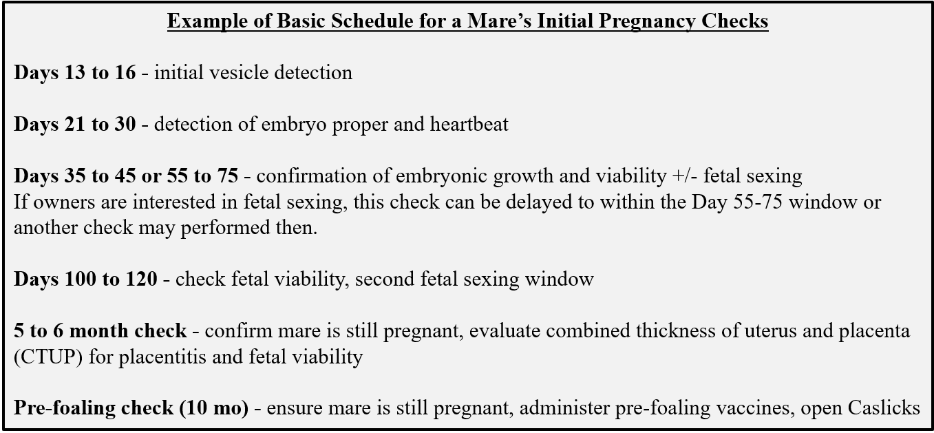 Basic Schedule for a Mares Initial Pregnancy Checks - Example December 2020