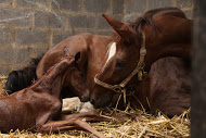 Establishing a Foal's Healthy Gut Microbiome - mare and foal photo