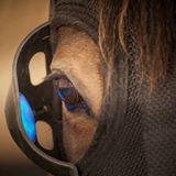 New Alternative - Equilume mask eye