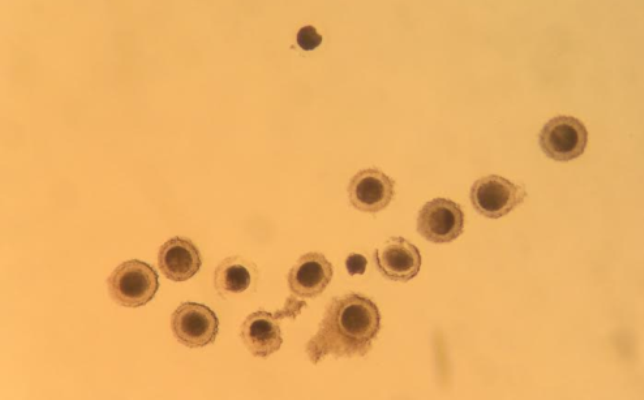 Trends in Equine Assisted Reproduction_Oocytes